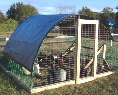 Chicken tractor made from dog panel stapled to wood frame